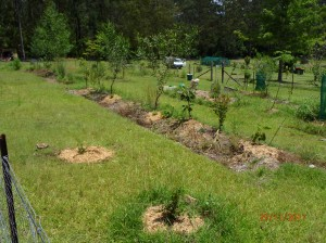 Young Food Forest